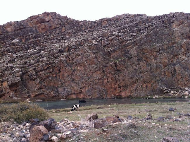 モロッコ 牛 川辺