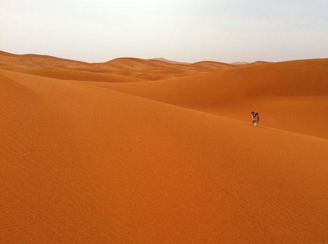 サハラ砂漠 小犬