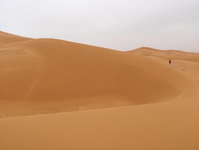 サハラ砂漠 小犬と一緒に