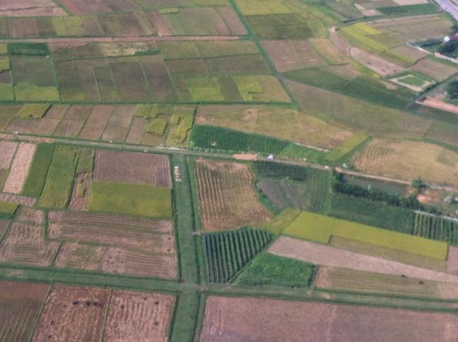 ハノイ近郊の田んぼ