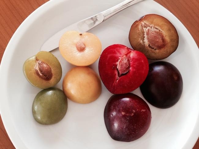 カラフルな色を楽しむプラム(西洋スモモ)の食べ方と超簡単レシピ